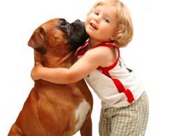 boxer dog health