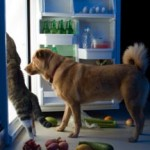 Dog Food Raw Diet-What They Don't Want You to Know