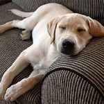 Sick Dog Symptoms Explained and How to Stop It
