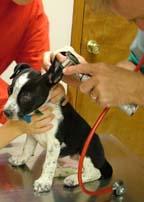 symptoms of parvo in dogs