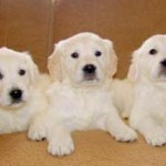 Raw Food Diet for Puppies and The Truth Behind Pet Food