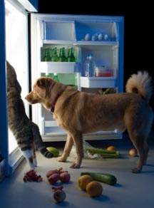 dog food raw diet