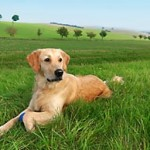 21 Reasons to Choose the Best Holistic Dog Food