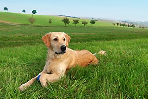 what is the best holistic dog food