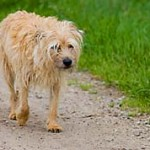 How to Spot Dog Allergies Symptoms and What to Do