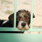 Is This a Disaster Waiting to Happen – Dog Rescue Shelters