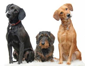 Dog Food Comparisons Reveal One Clear Winner