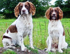 Raw Meat Diet for Dogs – The Best a Dog Can Get