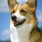 What You Ought to Know About Organic Dog Food
