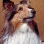 Dog Skin Allergies-Solve Rash, Ear and Coat Problems Fast