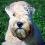 Feeding Your Dog Raw Food Heals Dog Depression
