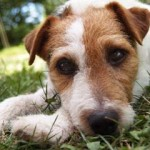 How to Stop Dog Itching Effectively and for Life
