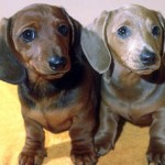 Dog Diarrhea-How to Stop It in Weeks Naturally and for Life