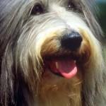 Kidney Disease in Dogs-The Only Treatment That Works