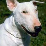Dog Food Additives Cause Dog Urine to Burn Grass