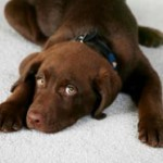 Puppy Dog Training That's Effective, Fast And Fun