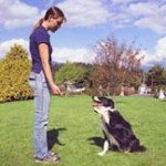 Dog Training Tricks Your Dog Can Learn Quickly