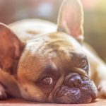 7 Easy Ways to Boost Your Senior Dogs Health Fast