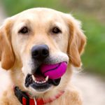 8 Causes of Dog Diarrhea All Dog Owners Should Know About